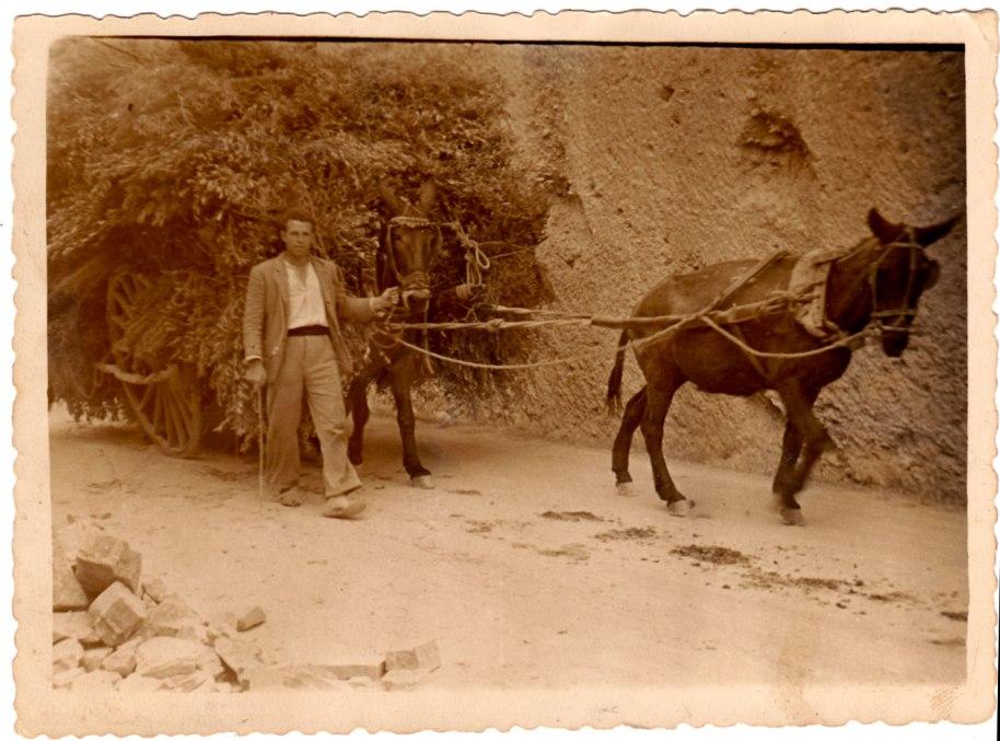 Més oficis: un joveníssim Juan José 'Tata' portant una carretada de gavells a Onda. Cap a l'any 50.