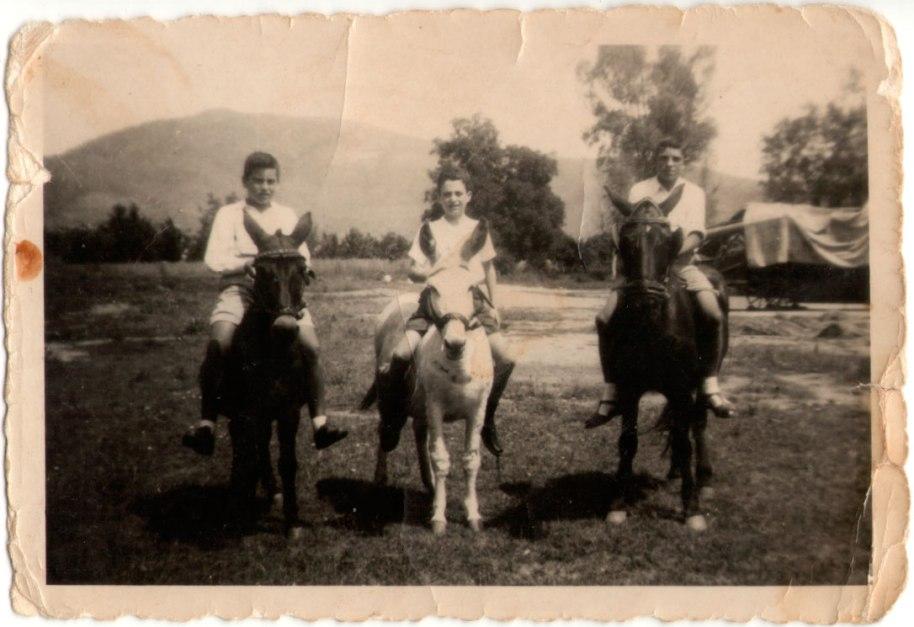 """D'esquerra a dreta: José Pitarch Royo amb la seva mula, Benjamín Villalba Caraquitena amb el seu ase i Josep Herrero Cabanyes amb el seu cavall. Es troben a la trilladora, és una foto de l'any 1953, els protagonistes tenien 10 anys. Era diumenge, per la llum es pot deduir que de matí. Era a principi del mes de juny, estava la trilladora a punt (tapada amb un tendal) però encara no hi havia palla, no s'havia trillat gens. Darrere, a l'altra banda de la carretera hi havia un anouer gran, ara desaparegut, i també els magnífics eucaliptus de la carretera d'Eslida. Més lluny estava la Serra Creu. Josep Herrero ens conta que els diumenges solien anar a passejar i a córrer amb els animals, el seu cavall era per feines agrícoles, el mul o mula de José Pitarch, a part de les tasques agrícoles, l'usava son pare per a viatjar per l'Alt Millars, el Maestrat i zones d'Aragó on exercia l'ofici de sarier. L'ase de Benjamín Villaba també feia tasques agrícoles i transport d'animals, perquè son pare era carnicer. Havia de ser diumenge perquè els altres dies, inclòs dissabte, els xiquets tenien escola i els pares usaven els animals per treballar. """"El cavall, continua Josep, era en realitat una egua molt mansa i d'una qualitat excepcional per al treball, li deien Lucera, guarde un record inesborrable d'ella encara que lamente no haver tingut més sensibilitat i respecte, que el teníem, a aquest ser tan extraordinàriament bo"""". Respecte a la roba, cada un portava el que duia habitualment, no hi havia una roba especial per pujar a cavall. Com anècdota conta el següent: """"En una ocasió el cavall em va tombar perquè es va ficar baix d'una olivera i vaig entropessar amb les branques que estaven molt baixes. L'animal va anar a casa corrent deixant-me a terra; quan vaig arribar a la quadra es va espantar fent-se arrere pensant que anava a pegar-li, jo em vaig limitar a acariciar-lo, era el que m'ensenyava mon pare de com s'havia de respectar als animals""""."""
