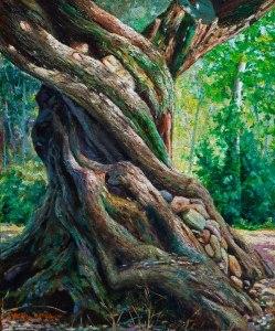 Tronc d'olivera 1. 46x38 cm
