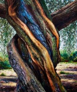 Tronc d'olivera 7. 65x54 cm