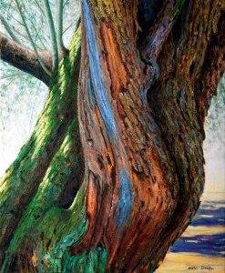 Tronc d'olivera 8. 73x60 cm