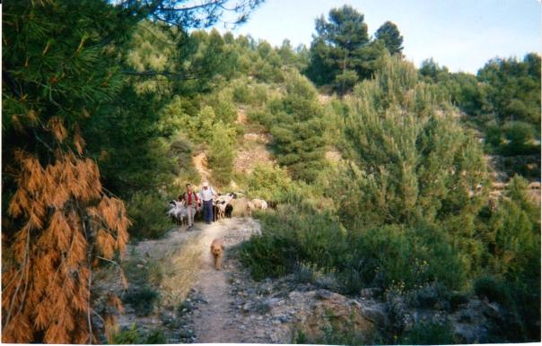 Viatjant per zona de muntanya prop de la Plana