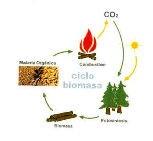 cicle-biomassa