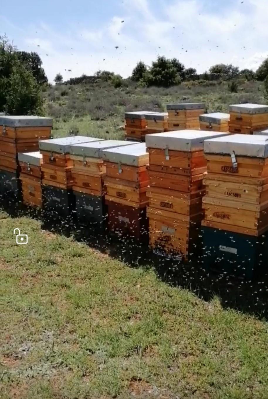 5 abelles