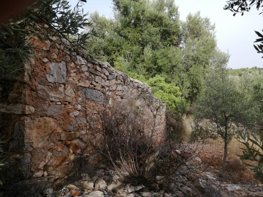 50 colmenar Barranc de Nules
