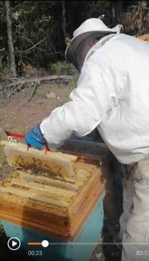 7 abelles